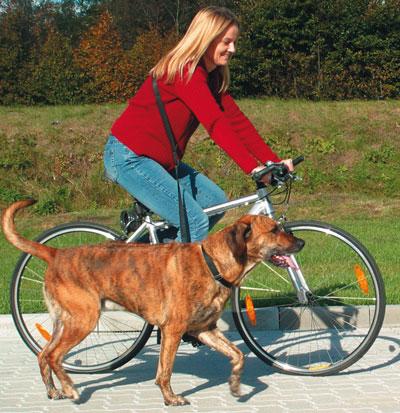 Fahrradleine / Joggingleine TRIXIE 1-2m 25mm schwarz Bild 1