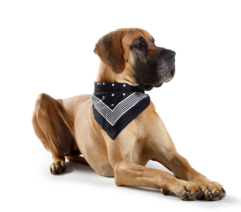 Hundehalstuch Hunter Nicky-Tuch 55x55cm schwarz Bild 2