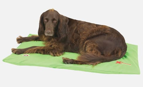 Hundebett / Hundekissen Doggy Duvet Bench X-Treme Gr. M Apple Green Bild 1
