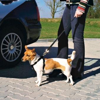 Sicherheitsgurte für Hunde TRIXIE Größe XS Bild 2