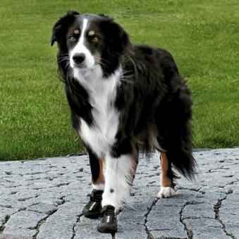 Hundeschutzstiefel Walker Active TRIXIE Gr. L-XL Bild 2