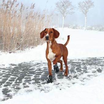 Hundeschutzstiefel Walker Active TRIXIE Gr. M Bild 2