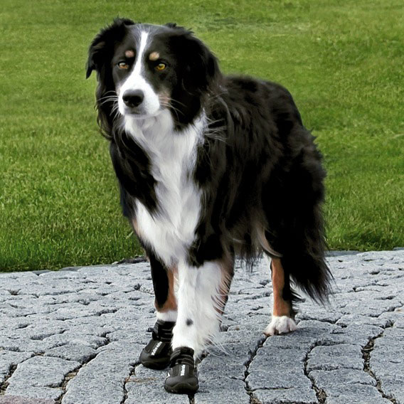Hundeschutzstiefel Walker Active TRIXIE Gr. XL Bild 2