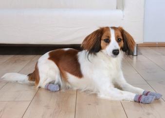 Hundesocken Antirutsch Trixie Gr. S-M grau Bild 2