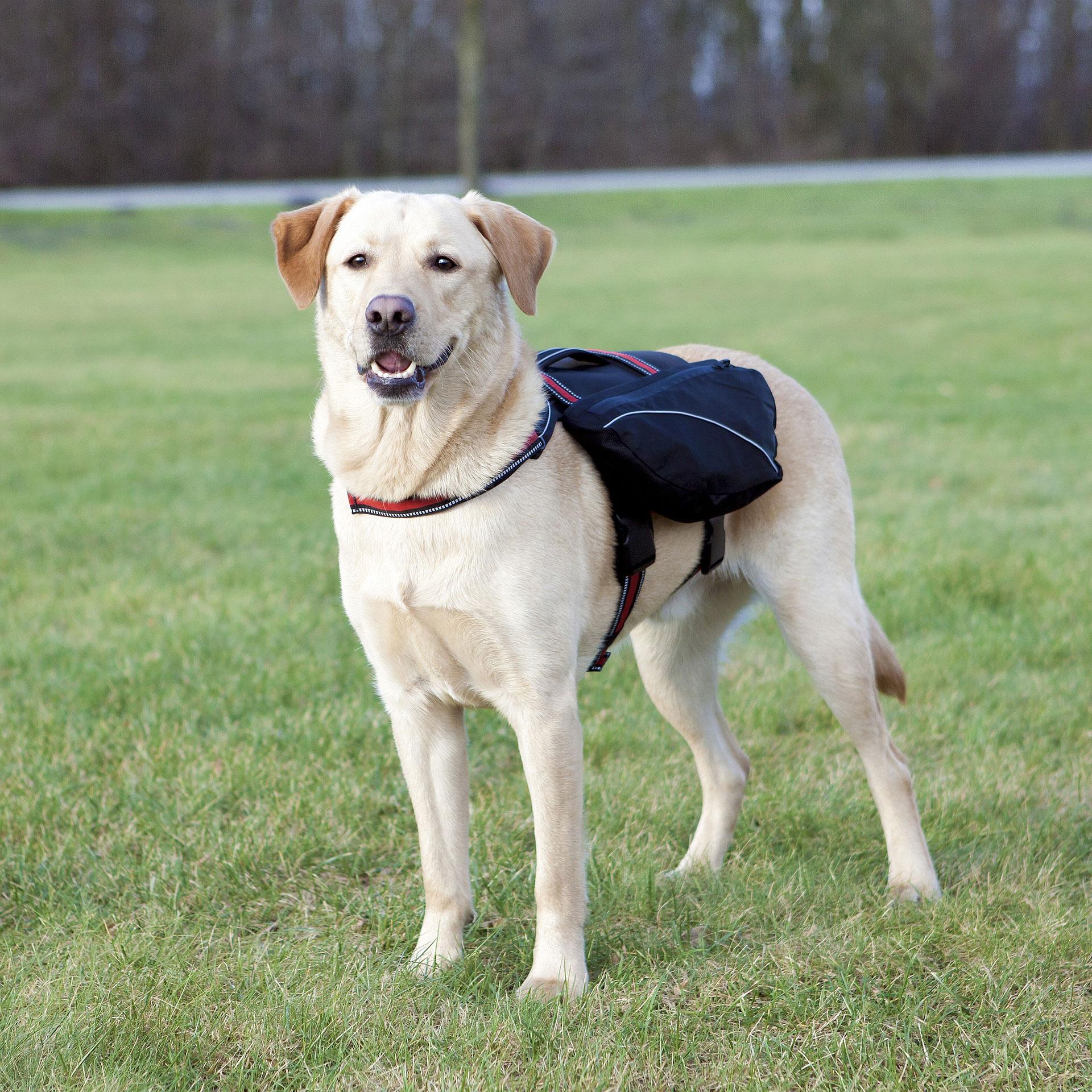 Rucksack für Hunde TRIXIE Gr. L schwarz Bild 1